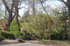 zasadź drzewa Zdjęcia Royalty Free