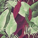 zasadź tropikalnego royalty ilustracja