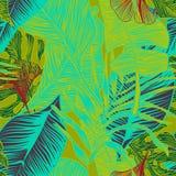 zasadź tropikalnego ilustracji