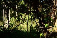 zasad? tropikalnego El Nicho &-x28; Cienfuegos&-x29; , Kuba zdjęcie royalty free