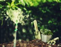 Zasadzać małej rośliny na stosie ziemia z ogrodnictw narzędziami na zielonym bokeh tle Obrazy Stock