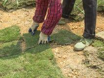 Zasadzać Nowe traw płytki Obraz Royalty Free
