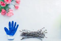 Zasadzać sadzonkowego rodzynku w garnkach, ogrodowi narzędzia obraz royalty free