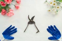 Zasadzać sadzonkowego rodzynku w garnkach, ogrodowi narzędzia fotografia royalty free