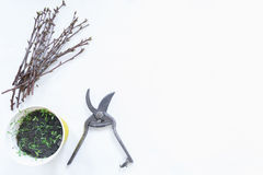 Zasadzać sadzonkowego rodzynku w garnkach, ogrodowi narzędzia obrazy royalty free