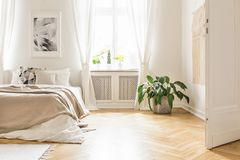 Zasadza blisko łóżka z koc w białym sypialni wnętrzu z poczta obraz royalty free