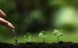 Zasadza drzewa, Ochrania drzewa, ręki pomoc drzewo, R kroka, Nawadnia drzewa, opieki drzewo, natury tło Fotografia Royalty Free