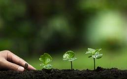 Zasadza drzewa, Ochrania drzewa, ręki pomoc drzewo, R kroka, Nawadnia drzewa, opieki drzewo, natury tło Fotografia Stock