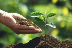 Zasadza drzewa ręki stawia ziemię i nawadnia drzewa Zdjęcia Royalty Free