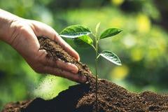 Zasadza drzewa ręki stawia ziemię i nawadnia drzewa Obrazy Royalty Free