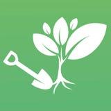 Zasadzać drzewa w ziemi Zdjęcie Stock