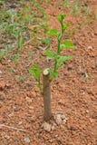 Zasadza drzewa yourself w domu ogródu mieszance i kultywuje Obraz Stock