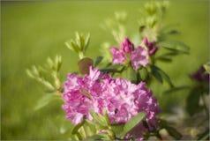Zasadza i kwiaty w przedpolu z ogrodowym tłem Fotografia Stock