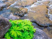Zasadza na rzece wiele rockowego zielonego abstrakcjonistycznego tło Zdjęcie Royalty Free