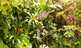 zasadza tropikalnego Zdjęcie Stock
