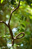 zasadza tropikalny las deszczowy fotografia stock