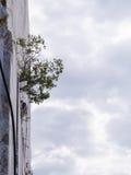 Zasadza urodzonego w pęknięciu marmurowa góra Obraz Stock