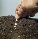 Zasadzać ziarna W ziemi Fotografia Stock
