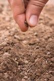 Zasadzać ziarna w ziemi Zdjęcie Stock