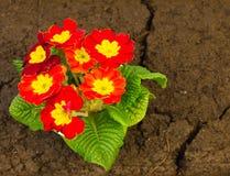 zasadzający świeżo ogród zdjęcia stock
