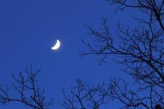 Zasięg dla księżyc Fotografia Royalty Free