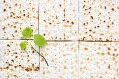 Zasięrzutna fotografia kawałki i małej wiosny świeża lipowa gałąź matzah lub matza Matzah na drewnianym stole dla Żydowskiego fotografia royalty free