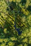 Zasięrzutny widok las widzieć od samolotu zdjęcia stock
