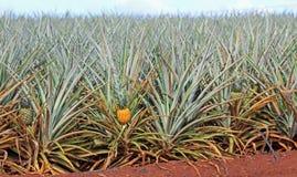 Zasiłek dla bezrobotnych plantacja Fotografia Royalty Free