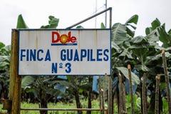 Zasiłek dla bezrobotnych bananowa plantacja w Costa Rica Zdjęcie Stock