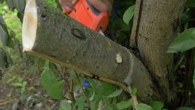 Zasilanie elektryczne zobaczył tnącego z drzewnego śniadanio-lunch zbiory wideo