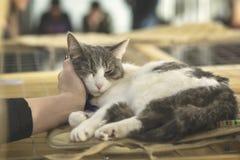 Zaskakujący bezdomny samotny puszysty kot z smutnym spojrzeniem, kłama na klatce w schroniskowym czekać na domu adoptuje on Gość  obraz stock