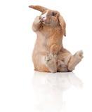 zaskakujący mały królika obsiadanie zdjęcie stock