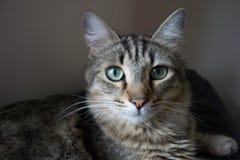 Zastanawiać się kota 2 Zdjęcia Stock