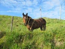 Zastanawia się koń za ogrodzeniem zdjęcia royalty free