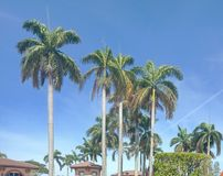 Zastanawiam się wysokiego drzewka palmowego z niebieskim niebem fotografia stock