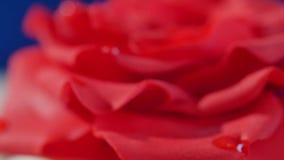 Zasycha, jeden warstwy biały i brown czekoladowy tort z czerwieni różą na wierzchołku, makro- Pokrojony czekoladowy tort dekorują zbiory wideo