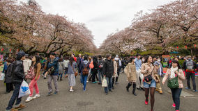 Zatłoczeni ludzie przy Sakura festiwalem Fotografia Stock