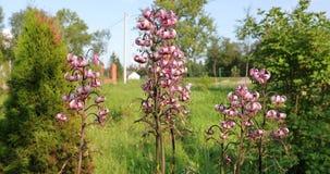 Zatarci kwiaty w jardzie w lecie zbiory