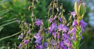 Zatarci kwiaty w jardzie w lecie zbiory wideo