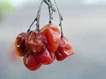 Zatarta wiązka cranberry Zdjęcie Stock