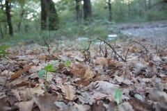 Zatartego chwila stylu spadku dębu kolorowi susi liście mięli na lasowej podłoga Fotografia Royalty Free
