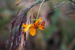 zatarty kwiat Zdjęcia Stock