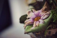 zatarty kwiat Zdjęcie Royalty Free
