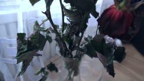 Zatarty kwiat róż stojak w wazie zbiory