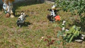 Zatarty ogród przyćmiewa w frontowym jardzie zbiory wideo