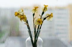 Zatarty podeszczowy na zewnątrz okno i kwiaty fotografia stock