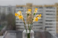 Zatarty podeszczowy na zewnątrz okno i kwiaty zdjęcie royalty free