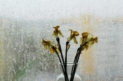 Zatarty podeszczowy na zewnątrz okno i kwiaty zdjęcia stock