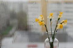Zatarty podeszczowy na zewnątrz okno i kwiaty obrazy royalty free