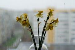 Zatarty podeszczowy na zewnątrz okno i kwiaty obraz royalty free
